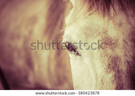 Close up a horse in animal hospital. Filter like a film and selective focus  - stock photo