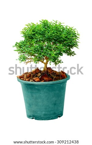 Close-up a tree in flowerpot isolated on white background. - stock photo