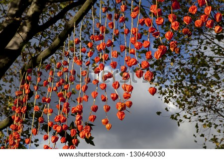 close up abstract of Physalis in little india diwali festival of lights - stock photo