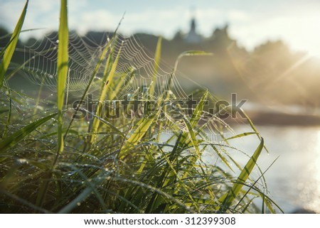 Close up and wide-angle shot of the grass in a dew - stock photo