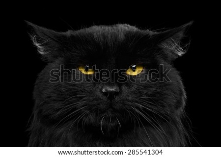 Close-up Angry Black Cat with Yellow Eyes in Dark - stock photo