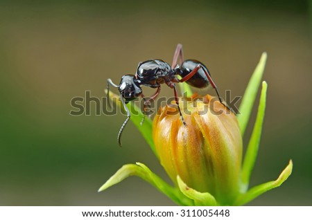 close up ant in nature - stock photo