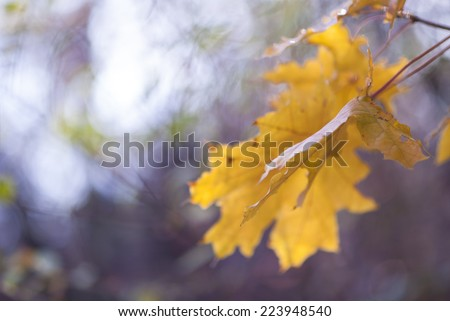 Close up autumn leaves background - stock photo
