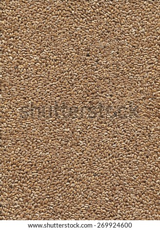 Close up background of wheat. - stock photo