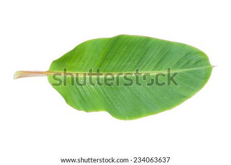 Close up banana leaf with water droplet isolated on white background