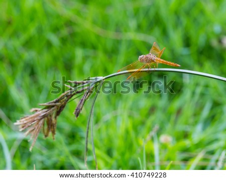 Close up Beautiful dragonfly on leaf, Select focus at insect and blurred background. - stock photo