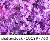 close-up beautiful lilac background - stock photo