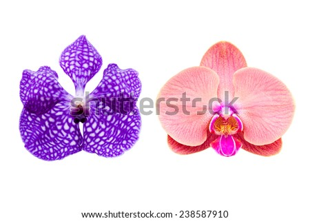 Close-up beautiful orchid isolated on white - stock photo