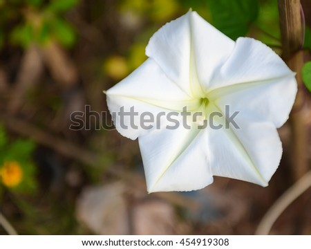 Close up beautiful white wildflower background - stock photo