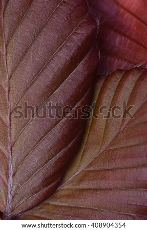 Close up beech leaves texture - stock photo