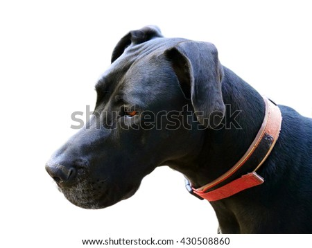 Close up black dog isolated on white background (with clipping path) - stock photo