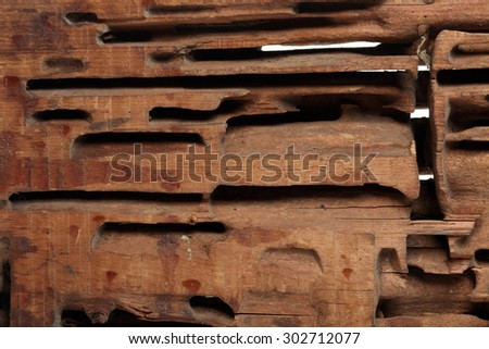 close-up block cutting wood termites on white studio background