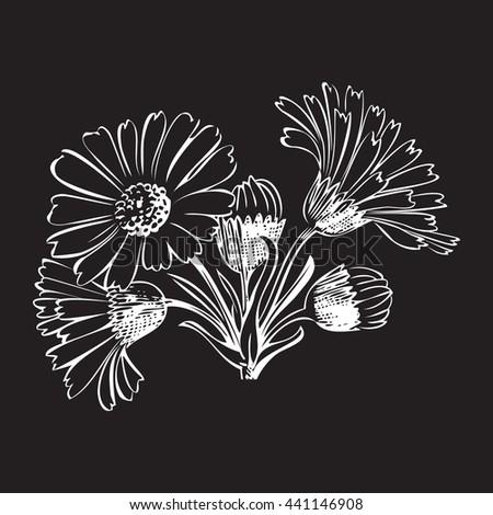Close-up blooming flower chamomile isolated on black spring eco floral organic leaf line botanical curve symbol botanic summer pen drawing paint white vertical daisy ink illustration stem flora retro - stock photo