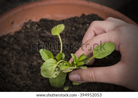 Close up - boy hand planting young flower .Agriculture and environment background.