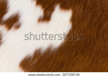 Close up Brown and white cowhide ,Fragment of skin a cow - stock photo