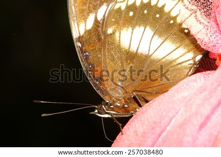 close up brown butterfly in garden ,thailand