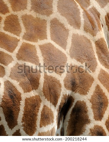 Close-up brown giraffe skin texture - stock photo