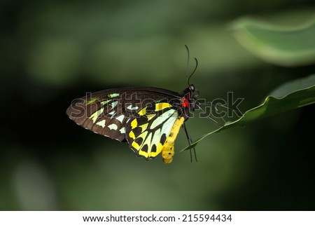 close up butterfly on leaf - stock photo