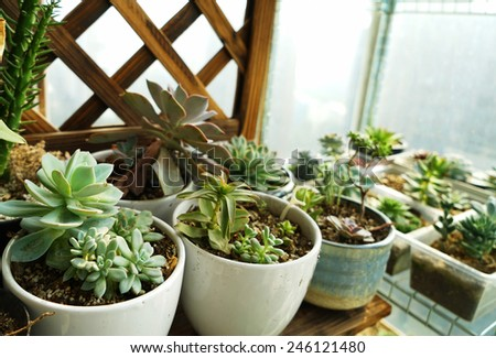 close up cactus plant in flowerpot - stock photo