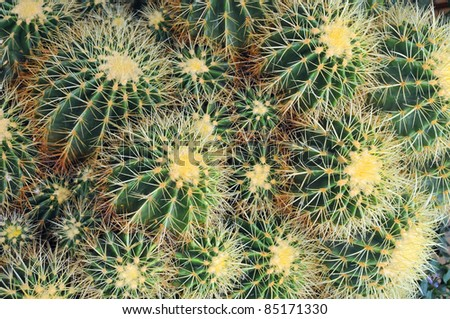 Close-up cactus (plural: cacti, cactuses or cactus) is a member of the plant family Cactaceae. Their distinctive appearance is a result of adaptations to conserve water in dry and/or hot environments. - stock photo