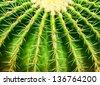 Close up cactus texture detail - stock photo
