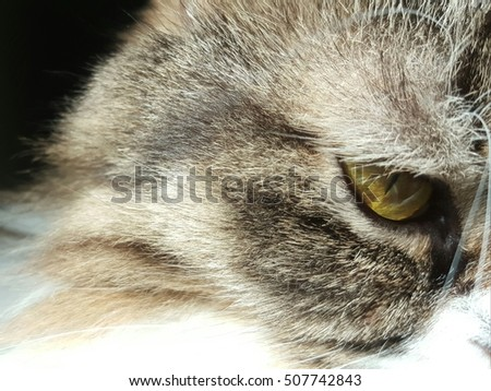Close up cat eye isolated on black background.