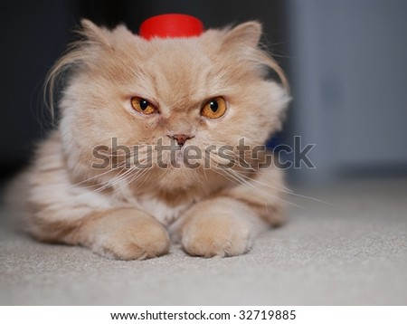 Close up cat wears red hat - stock photo