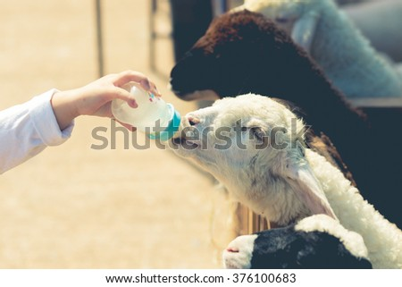 Close up child feeding milk bottle to cute sheep,Vintage filter.