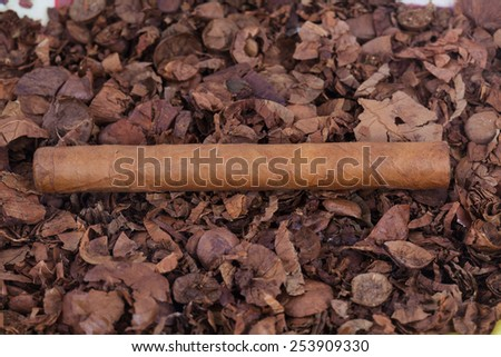 close up cigar and cutting apart of cigar on ashtray - stock photo