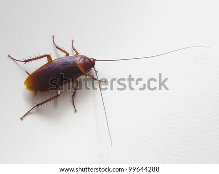 Close up cockroach - stock photo