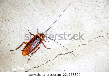 Close up cockroach on the wall - stock photo