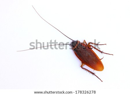 Close up cockroach on white background