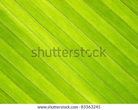 close up coconut leaf - stock photo