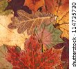 Close-up colorful autumn leaves background - stock photo