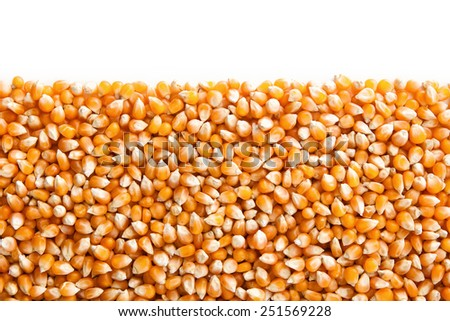 Close up Corn beans background with copy space - stock photo