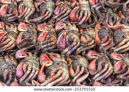 Close up Crabs in fresh market - stock photo