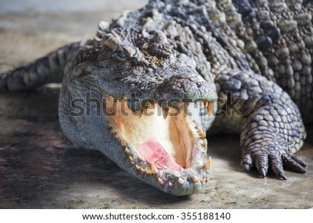 Close up crocodile. - stock photo