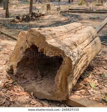 close-up Cut wood tree in the forest  - stock photo
