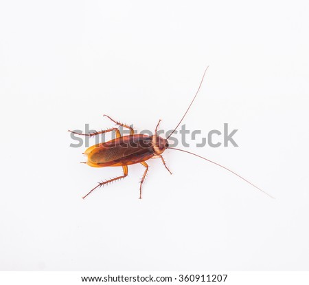 Close up dead cockroach on white background