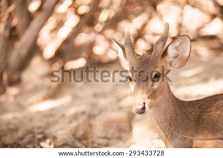 Close-up deer in wild nature. - stock photo