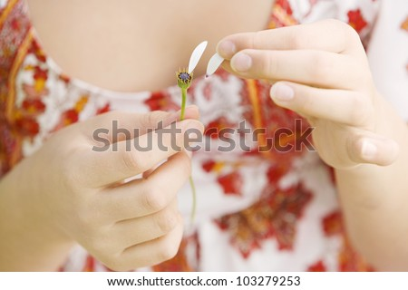 Close up detail of a girl's hands pulling the last petals off a daisy flower.