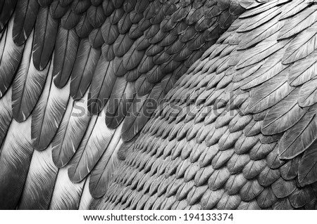 Close up detail of a statue's eagle feathers - stock photo