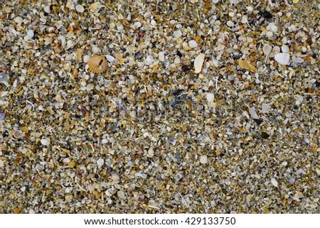 close up detail of broken shells on beach - stock photo