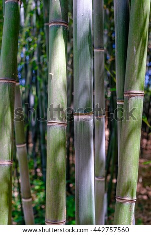 Close up details of bark on Bamboo Trees - stock photo