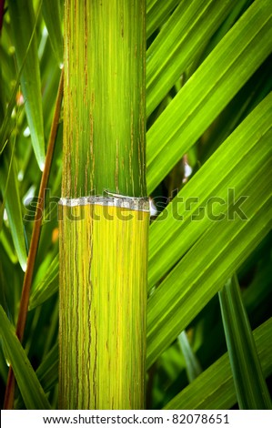 Close up details of tropical palm and bamboo