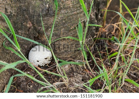 Close up dirty Golf ball at the base of tree - stock photo