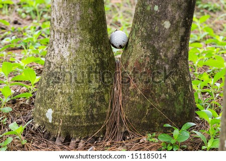 Close up dirty golf ball stuck between two palm trees - stock photo