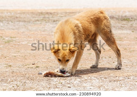 Close up dirty stray dog eating the bone on ground - stock photo