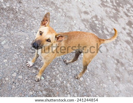 Close up dirty stray dog standing on bumpy road and looking up to camera - stock photo