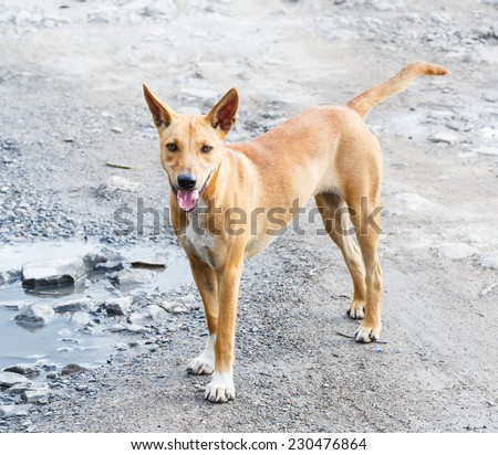 Close up dirty stray dog standing on bumpy road with water - stock photo